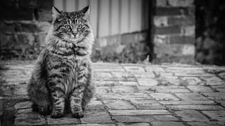 cat-514319__180-1